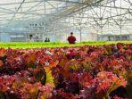 contoh-aquagriculture.jpg