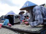 cuaca-buruk-produksi-ikan-teri-asin-di-pulau-pasaran-menurun_20200604_233010.jpg