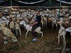 daging-qurban-untuk-indonesia_20180824_203553.jpg