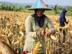 dinas-pertanian-dan-ketahanan-pangan-provinsi-jawa-timur.jpg