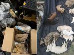 diperjualbelikan-5000-hewan-peliharaan-ditemukan-mati-dalam-kardus-di-pusat-logistik-di-china.jpg