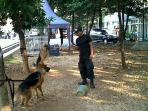 dua-anjing-k9-milik-dpr_20150902_174004.jpg