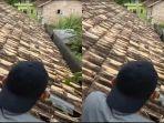 dua-ekor-babi-hutan-di-atas-atap-rumah-warga.jpg