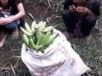 dua-pemuda-curi-pisang1.jpg