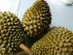 durian_20160828_160212.jpg