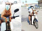 Anjing di Malaysia Ini Pakai Masker Saat Keluar Rumah, Butuh Sepekan Membujuk Agar Memakainya