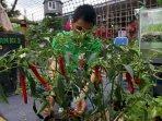 festival-napi-berkebun_20151218_182908.jpg