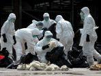 Sejak Akhir November 2020, Korea Selatan Sudah Laporkan 44 Kasus Flu Burung