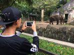foto-gajah_20170626_124518.jpg
