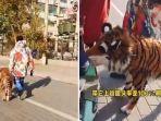 Viral di Medsos, Pria di China Ajak Seekor Macan Jalan-jalan, Ternyata Anjing Dicat Loreng