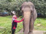 gajah-di-medan-zoo-lepas.jpg