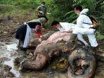 gajah-mati-ok.jpg