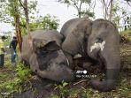 gajah-tewas-di-india.jpg
