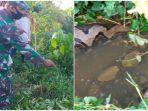 geger-penemuan-ular-piton-di-aceh-jaya-berbobit-300-kg-dan-panjang-8-meter-perutnya-membesar.jpg