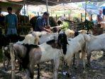 h-3-idul-adha-1441-h-penjual-hewan-kurban-masih-sepi-pembeli_20200728_185722.jpg