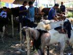 h-3-idul-adha-1441-h-penjual-hewan-kurban-masih-sepi-pembeli_20200728_190216.jpg