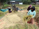 AUTP Bisa Bantu Petani Sulut Terhindar dari Kerugian