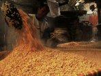 Permintaan Kedelai China akan Tetap Kuat pada 2021, Didorong Pemulihan Ternak Babi