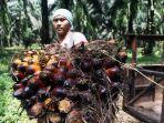 Belum Ada Kemitraan Petani dan Perusahaan, Pemerintah Diminta Tak Buru-Buru Terapkan B40