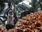 harga-tbs-kelapa-sawit-naik_20210917_200705.jpg