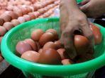 harga-telur-ayam-mulai-turun_20190615_213301.jpg