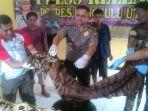 harimau-sumatera-dikuliti_20170515_122454.jpg