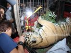 harimau-sumatera-mati-kena-jeratan_20180927_094944.jpg