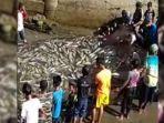 heboh-fenomena-langka-di-aceh-ratusan-ikan-kuwe-terjaring-pukat-nelayan-ini-pengakuan-warga.jpg