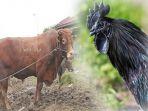 hewan-asal-indonesia-dengan-harga-fantastis_20180503_183008.jpg