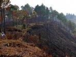 hutan-di-kawasan-danau-toba-memprihatinkan_20160731_212839.jpg