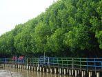 hutan-manggrove123.jpg