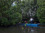 hutan-mangrove___.jpg