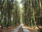 hutan-pinus_20160216_132347.jpg
