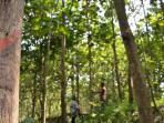 hutan-rakyat_20161026_111702.jpg