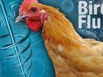 Lapor Ke WHO, Rusia Temukan Kasus Pertama Flu Burung pada Manusia