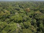 ilustrasi-hutan-amazon-454.jpg