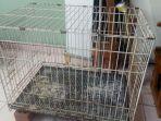 ilustrasi-kandang-kucing-penyiksaan-aak-ny-azlin-singapura.jpg