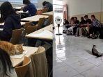 ilustrasi-kucing-yang-ada-di-lingkungan-kampus-news.jpg