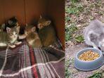 Induk Kucing Liar Kenalkan Bayi-bayinya pada Wanita yang Memberi Makan Berhari-hari