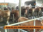 jelang-idul-adha-permintaan-sapi-limosin-meningkat_20160907_150240.jpg