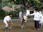 jokowi-dan-iriana-foto-bersama-sapi-kurban_1.jpg