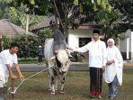 jokowi-dan-iriana-foto-bersama-sapi-kurban_4.jpg
