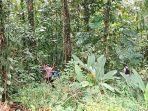 Buntut Tenaga Medis Ditembak Mati KKB Papua, Tim Gabungan TNI-Polrii Buru Pelaku