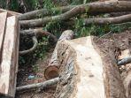 Bertemu Masyarakat Peduli Hutan, Gubenur NTT Bekukan Izin Edar Kayu Sonokeling