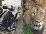kebun-binatang-san-diego-tetap-buka-namun-pengunjung-bisa-masuk-secara-virtual-atau-online.jpg
