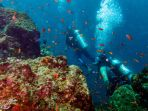 keindahan-terumbu-karang-bawah-laut-pulau-sabang_20170213_113931.jpg