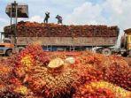 Pola Kemitraan dengan PTPN V Diharapkan Dorong Produktivitas Sawit Riau