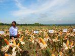 Para Ekonom dan Akademisi Yakin Sektor Pertanian Terus Tumbuh Positif di Kuartal II
