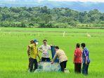 Bupati Paulus: Program Food Estate Adalah Kebijakan Mulia dan Berharga Bagi Masyarakat Sumba Tengah