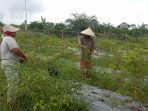 kemitraan-laj-dan-petani-hutan_20200925_024446.jpg